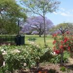 Парки Брисбенa- New Farm