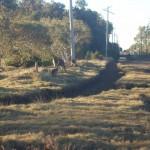 Оживленная дорога совсем рядом Австралия