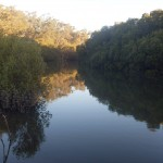 Кенгуру в Редклифе Австралия
