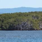 Заросли мангров вдоль берега