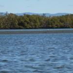 В устье много островков особенно во время отлива