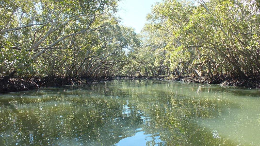 В дебрях австралийского леса