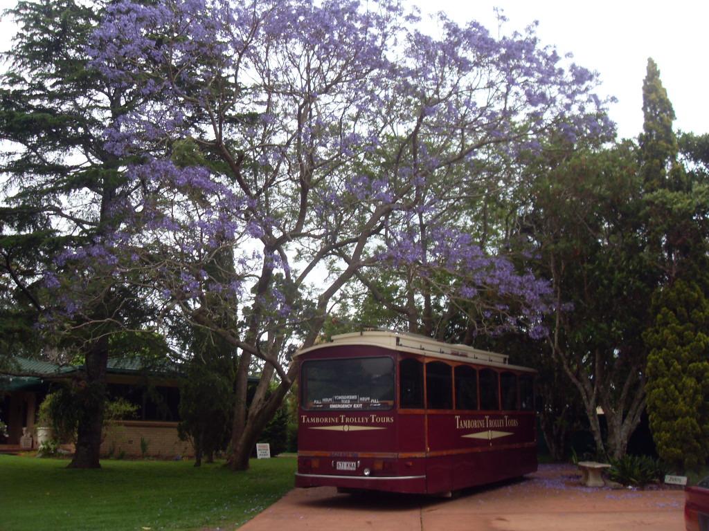 Автобус- туры по Тамбурин