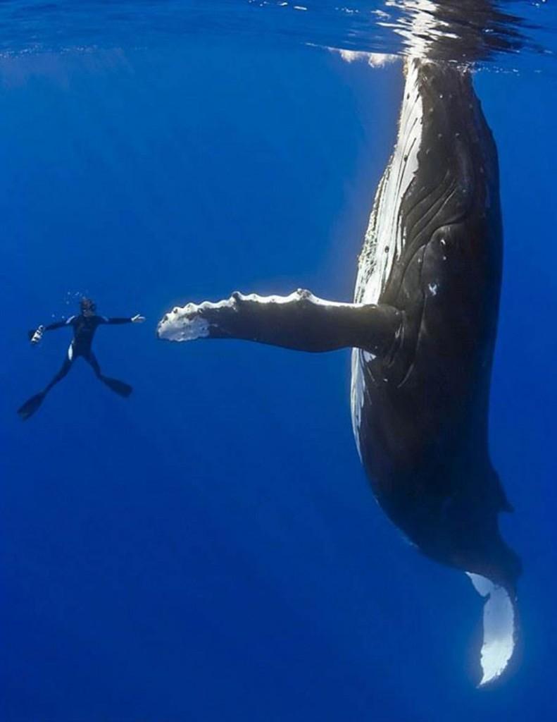 Член кита фото 29 фотография