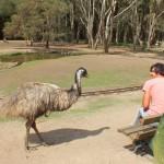 Зоопарк Карамбин-Currumbin Sunctuary