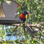 Птицы в моем дворе