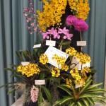 Композиция из орхидей.