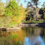 Ботанический сад Mount Coot-tha