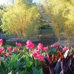 Лагуна и бамбуковая роща