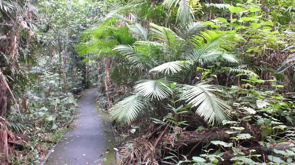 Пешеходная дорожка по тропическому лесу возле Куранда