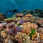 Пять дней в тропиках и на рифе