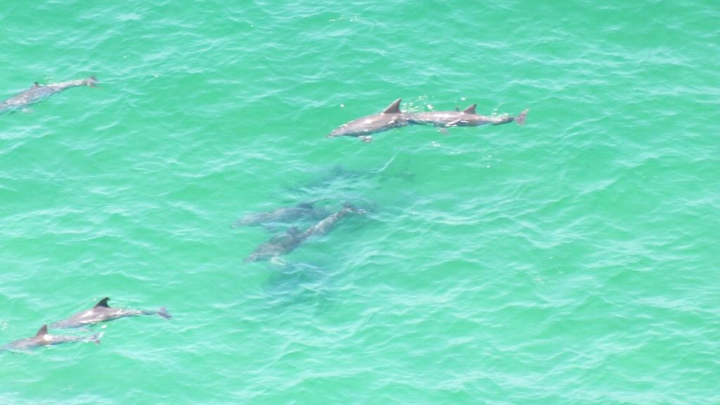 Дельфины в Байрон