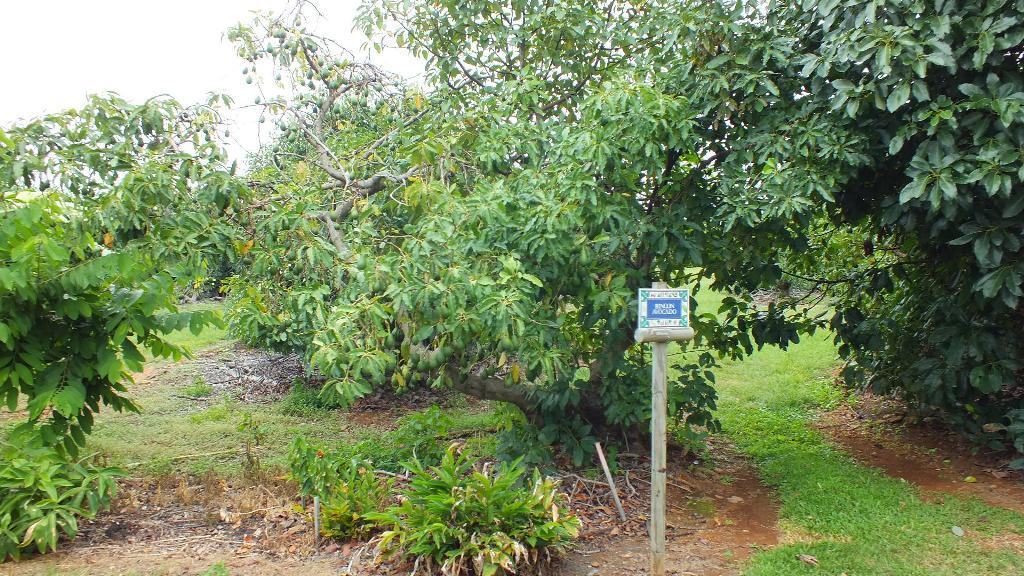 Проносились мимо деревьев увешаных фруктами