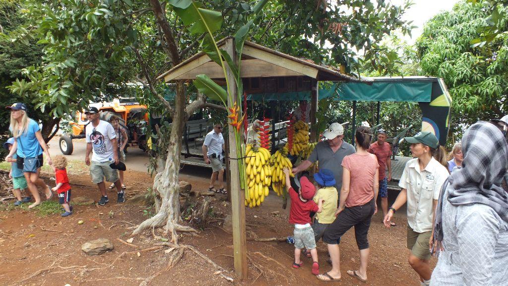 Остановка у бананов