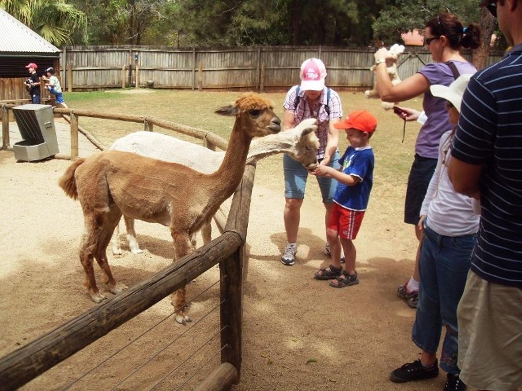 Alma Zoo Зоопарк