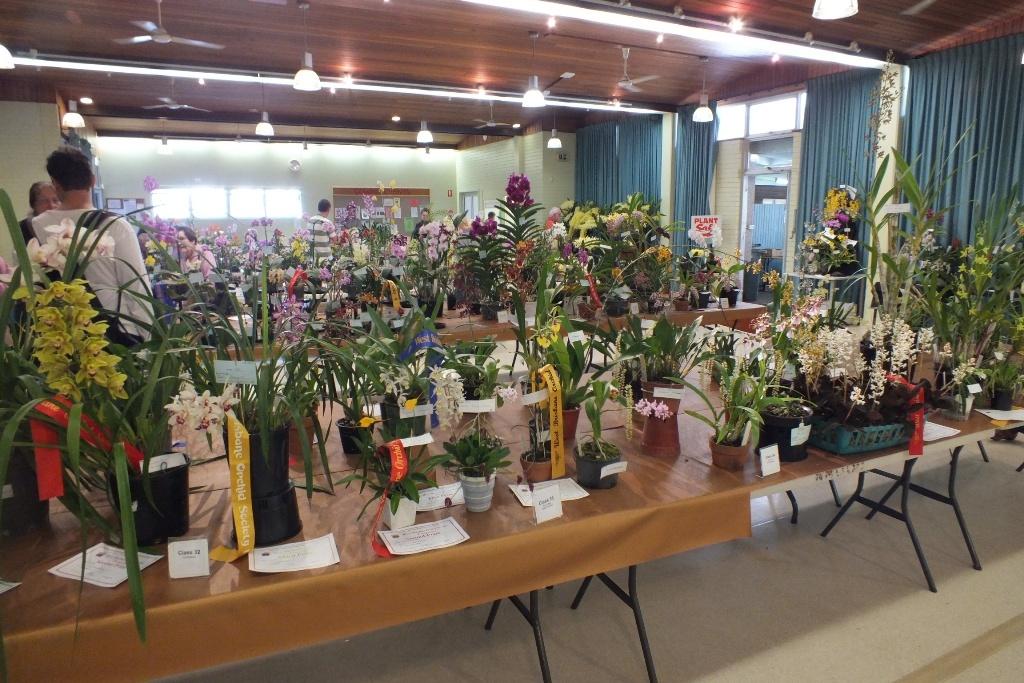 Выставка общества любителей орхидей