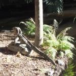 Водный дракон - скульптура