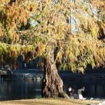 Спокойный отдых в парке
