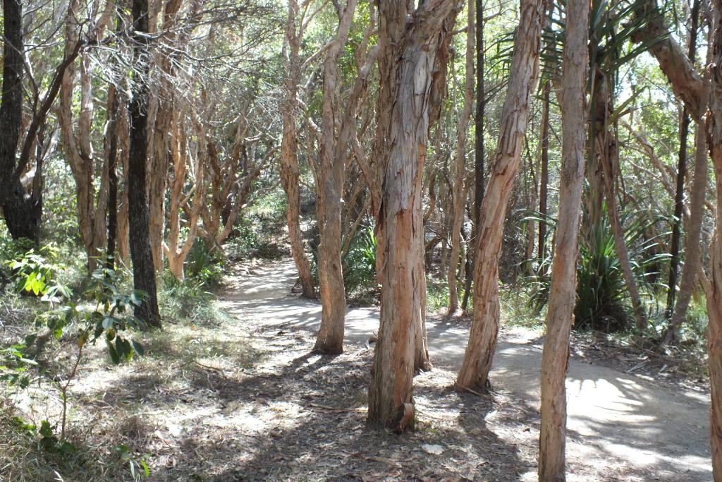 Тропинка в лесу. Noosa.