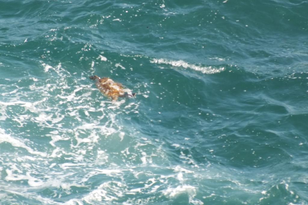 Морская черепаха. Чертовы ворота. Noosa.