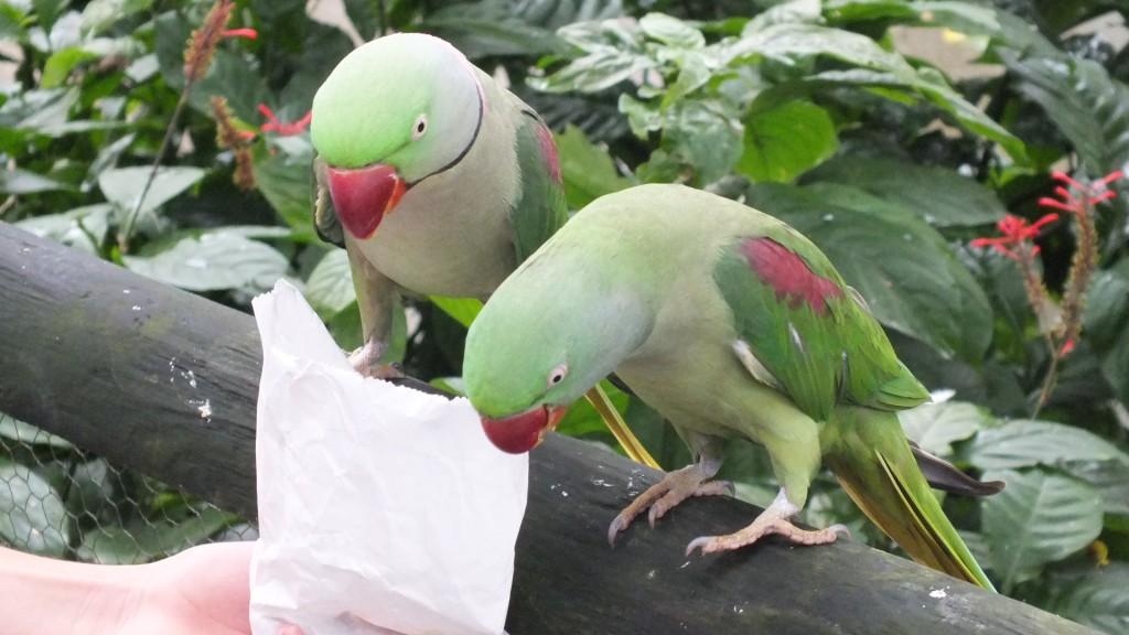 Птичник. Куранда. (Birdworld)