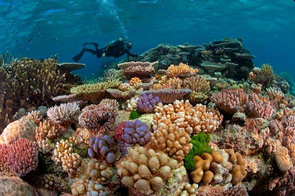 underwater-scientist-great-barrier-reef_68250_600x450