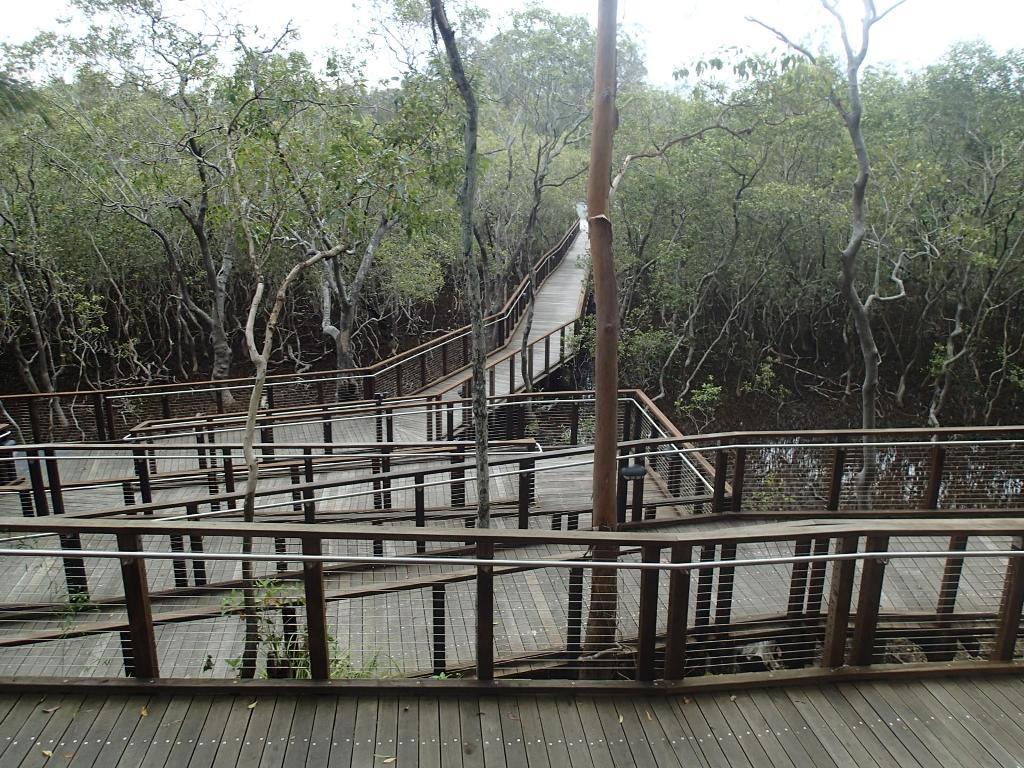 Дорожка в зоопарк по мангровым зарослям