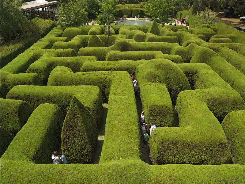 ashcombe-maze-1